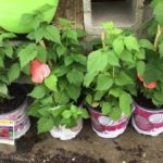 Quanh Orlando Mỹ: Xem Khu Ban Cay An Trai | Garden Center | Fruit Trees